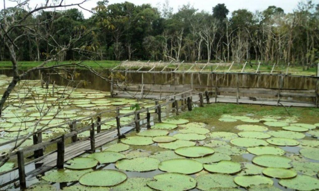 Parque ecológico em Iranduba, representando abrir empresa em Iranduba - Abertura Simples
