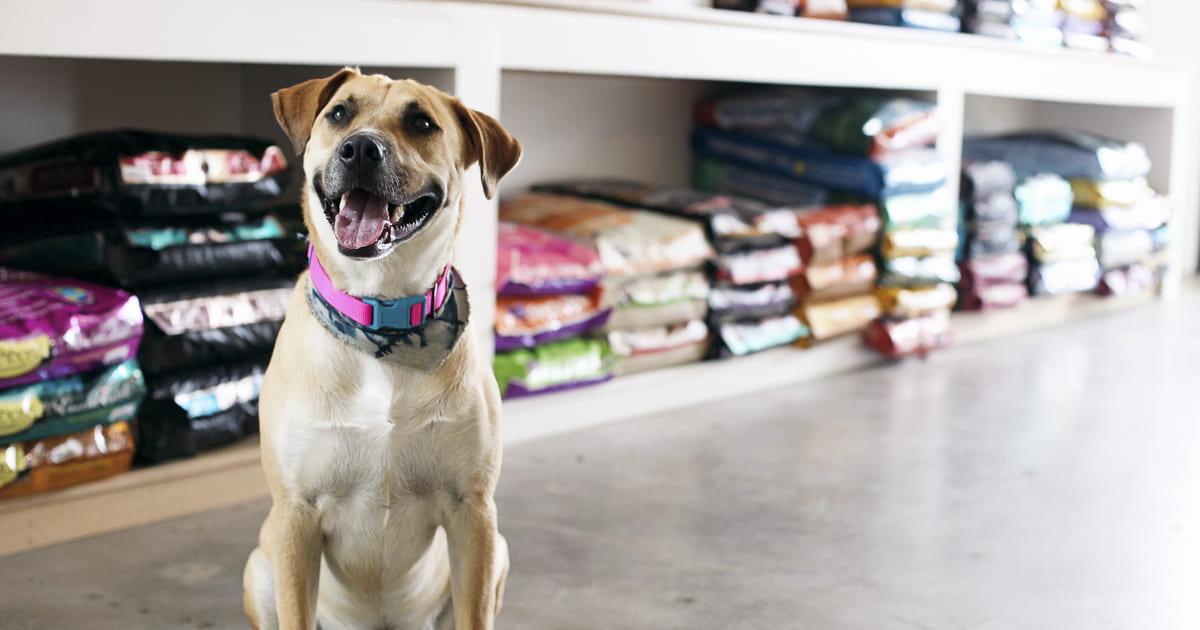 Foto de um cachorro em um petshop com rações atrás, representando o mercado pet