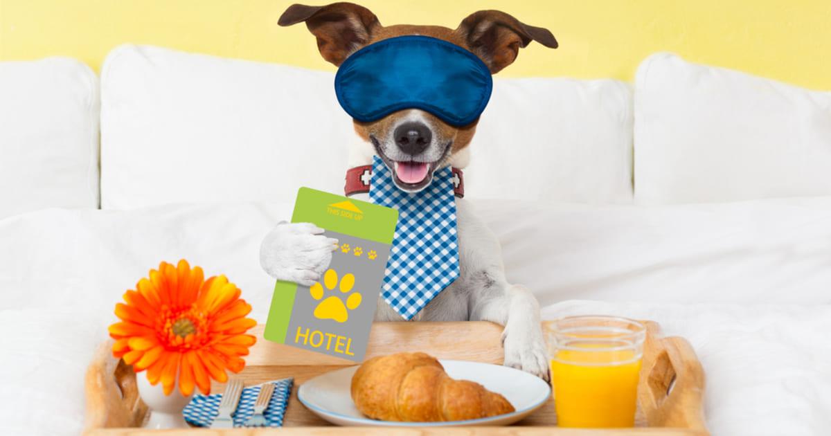 Cachorro, representando abrir um hotel para cachorros - Abertura Simples