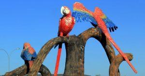 Imagem de araras que são simbolo da cidade para empreendedores que vão escolher escritório de contabilidade em Naviraí