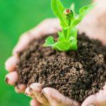 Imagem de uma planta na mão de um empreendedor para inspirar quem deseja montar um serviço de hidroponia