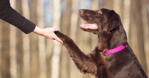Imagem de um cachorro dando a patinha para remeter ao empresário que vai montar um serviço de adestramento de cães