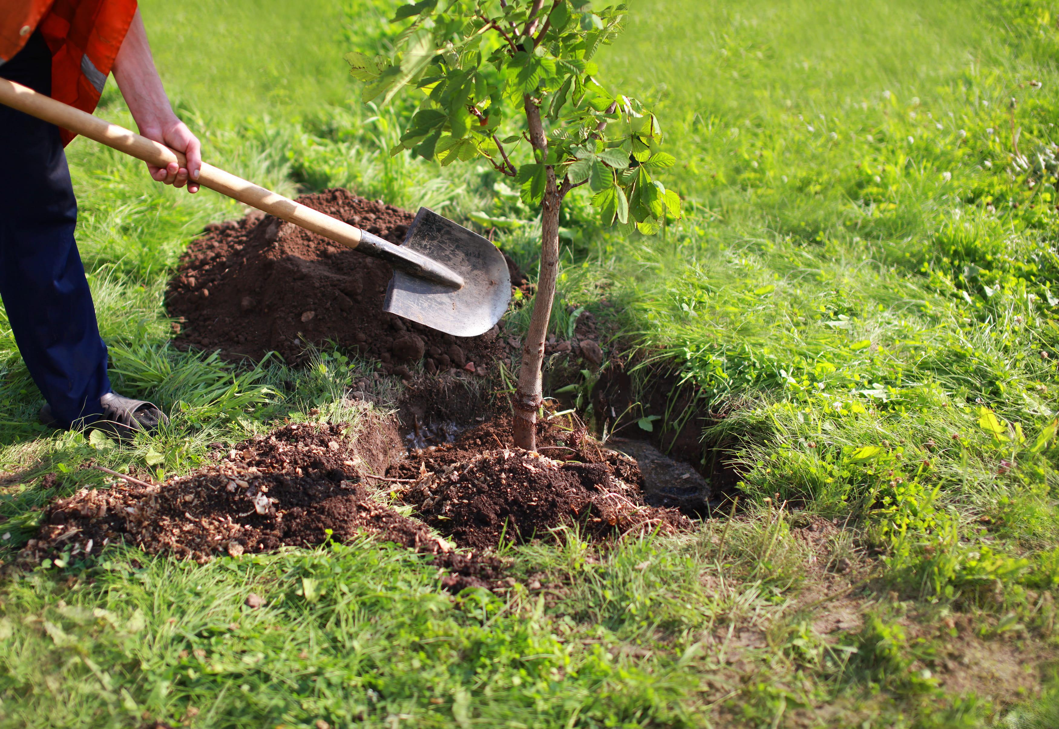 Imagem de uma planta para remeter ao empreendedor que deseja montar um serviço de hidroponia