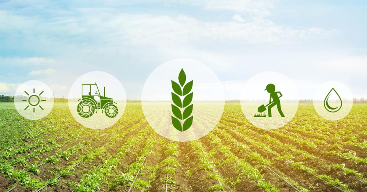 Imagem vetorizada com ícones que representam a contabilidade rural