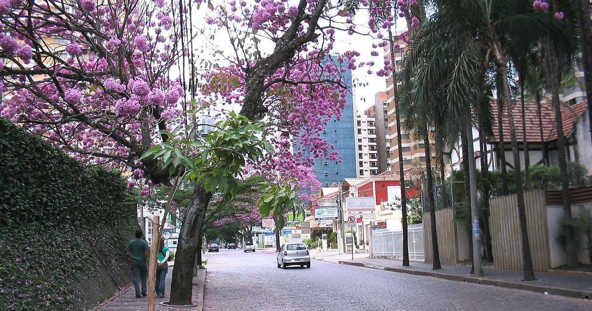 foto de rua do bairro, representando como escolher uma contabilidade em cambuí